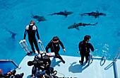 Lemon Sharks on the surface and Scuba diver, Negaprion brevirostris, Bahamas, Atlantic Ocean