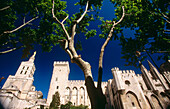 Papal Palace. Avignon. Provence. France