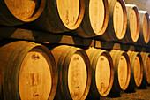 Wine Cellar at Niebaum-Coppola Estate Winery. Rutherford, Napa Valley. California, USA