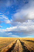 Wheat field road, landscape with dramatic sky. Stand Off. Alberta, Canada