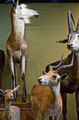 Stuffed wild animals in the Museum of Natural History, Vienna, Austria