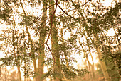 Branch, Branches, Color, Colour, Ecosystem, Ecosystems, Exterior, Foliage, Forest, Forests, Horizontal, Nature, Outdoor, Outdoors, Outside, Plant, Plants, Scenic, Scenics, Tree, Trees, Trunk, Trunks, Vegetation, Woods, CatV5, 10998, agefotostock