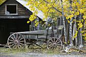Old Wagon. Downtown. Fall. McCarthy. Interior. Alaska. USA.