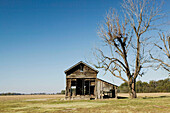 Cotton Field Shack. Stovall Farms. Huge Cotton Plantation that employed many Blues Musicians as laborers. Stovall. Mississippi Delta. Mississippi. USA.
