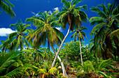 Außen, Botanik, Dicht, Farbe, Horizontal, Natur, Ozeanien, Palme, Palmen, Pflanze, Pflanzen, Plätze der Welt, Seychellen, Tageszeit, Tropisch, Vegetation, D88-185744, agefotostock