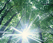 Beam, Beams, Beyond, Branch, Branches, Color, Colour, Concept, Concepts, Daytime, Energy, Enlightening, Enlightenment, Exterior, Foliage, Forest, Forests, God, Heat, Horizontal, Illumination, Light, Lighting, Low angle view, Nature, Outdoor, Outdoors, Ou