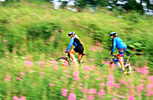 Aktivität, Alaska, Amerika, Aufsteigen, Außen, Bergauf, Bewegung, Blume, Blumen, Erholen, Erholung, Erwachsene, Erwachsener, Fahren, Fahrrad, Fahrräder, Fahrradfahren, Farbe, Fit, Frau, Frauen, Freizeit, Geschick, Geschicklichkeit, Gesundheit, Hang, Häng