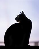 Black cat sitting at edge of window
