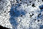 Bats emerging at dusk