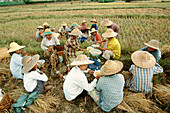 Worker s lunch. Between Heho and Pindaya rice fields. Myanmar.