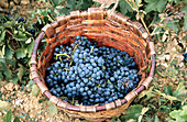 Agriculture, Basket, Baskets, Bunch, Bunches, Close up, Close-up, Closeup, Color, Colour, Country, Countryside, Crop, Crops, Daytime, Exterior, Farming, Field, Fields, Food, Grape, Grapes, Healthy, Healthy food, Horizontal, Nourishment, Outdoor, Outdoors