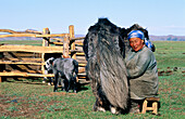 Woman milking. Arkhangai. Mongolia