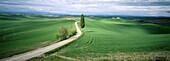 Near Siena. Tuscany. Italy