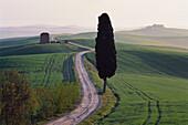 Landscape near Siena. Tuscany. Italy