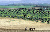 Country landscape near Aleppo. Syria