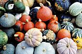 Pumpkins. Market. Aix-en-Provence. Bouches du Rhone. Provence. France
