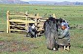 Nomad woman and yak. Arkhangai province. Mongolia