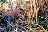 Sugar Cane cutter. San Luis Valley. Trinidad de Cuba. UNESCO World Heritage. Cuba