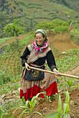 Vietnam. North Vietnam. Bac Ha area. Fields work. Flower Hmong ethnic group.
