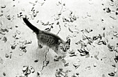 Domestic cat outdoors, looking at camera