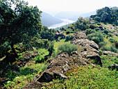 Landscape and Tajo River. Monfrague Natural Park. Caceres province. Extremadura, Spain