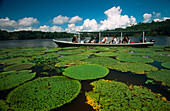 Water-lilies (Victoria regia) at Amazon River. Brazil