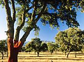 Cork oak and oaks. Meadows landscape.