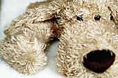 Animal, Animals, Childhood, Close up, Close-up, Closeup, Color, Colour, Dog, Dogs, Horizontal, Indoor, Indoors, Infantile, Innocence, Innocent, Inside, Interior, Looking at camera, One, Stuffed toy, Toy, Toys, F58-276835, agefotostock