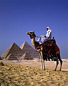 Arab on camel, Great pyramids, Giza ruins, Cairo, Egypt.