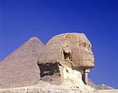 Face of sphinx & pyramid, Giza ruins, Egypt.