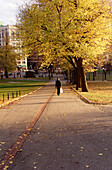 Woman walking through the Boston Commons in Boston. Massachusetts. USA