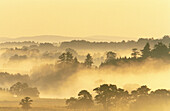Scattered decidous woodland cloaked in mist at dawn. River Spey. Cairngorms National Park. Scotland. UK