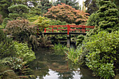 Heart Bridge framed by stone bridge over pond w/ Japanese Maples & Pines, autumn (Acer palmatum cv.; Pinus sp.; Rhododendron cv.). Kubota, Seattle, WA.