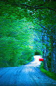 Calm, Calmness, Color, Colour, Concealed, Country, Countryside, Daytime, Deserted, Empty road, Empty roads, Exterior, Foliage, Forest, Forests, Green, Hidden, Mailbox, Mailboxes, Nobody, Outdoor, Outdoors, Outside, Peaceful, Peacefulness, Plant, Plants,