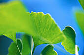 Abstract, Background, Backgrounds, Botany, Close up, Close-up, Closeup, Color, Colour, Detail, Details, Green, Horizontal, Leaf, Leaves, Natural background, Natural backgrounds, Nature, Plant, Plants, Texture, Textures, G22-151674, agefotostock