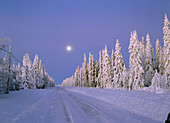 Full-moon and a road surrounded by a snowcovered spruceforest. Gammelboliden. Västerbotten. Sweden