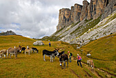 herd of donkeys with group of hikers, Forcella Giau, Alta Via delle Dolomiti No. 1, Dolomites, Cortina, Venezia, Italy