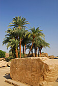 Fragment of wall with relief and group of palm trees, temple of Karnak, Egypt, Africa
