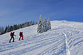 Three backcountry skiers ascending Wertacher Hoernle, Allgaeu Alps, Bavaria, Germany