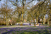 Krokusblüte im Schlosspark, Husum, Nordfriesland, Schleswig-Holstein, Deutschland