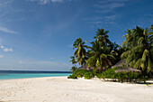 White sandy beach with palm trees, Luxury vacation on a private island with yacht, Rania Experience, Faafu Atoll, Maldives