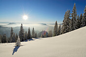 Snow-covered winter forest near hut Vorderkaiserfeldenhuette and fog bank in the valley of Inn, Poelven and Pendling above fog, Zahmer Kaiser, Kaiser range, Kufstein, Tyrol, Austria