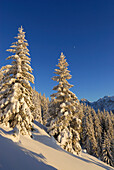 Snow-covered winter forest near hut Vorderkaiserfeldenhuette, Zahmer Kaiser, Kaiser range, Kufstein, Tyrol, Austria
