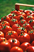 Außen, Biologische nahrung, Detail, Details, Ernährung, Ernte, Ernten, Farbe, Frisch, Frische, Gemüse, Gemüsegarten, Gesunde Ernährung, Landbau, Landwirtschaft, Nahaufnahme, Nahaufnahmen, Nahrung, Nahrungsmittel, Natürlich, neu, Rot, Schachtel, Schachtel