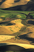 The Palouse. Washington. USA