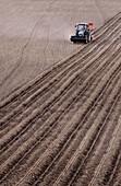 Tractor planting potatoes in field. Skåne, Sweden