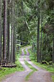 Dirt road thru pine forest. Sweden