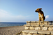 Dog looking to the sea. Greece.