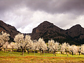 Agriculture, Bloom, Blooming, Blossom, Blossoming, Cloudy, Color, Colour, Country, Countryside, Crop, Crops, Daytime, Ecosystem, Ecosystems, Exterior, Farming, Field, Fields, Flower, Flowering, Flowers, Landscape, Landscapes, Mountain, Mountains, Nature,