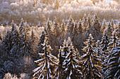 Außen, Baldachin, Baum, Bäume, Botanik, Farbe, Horizontal, Jahreszeit, Jahreszeiten, Kalt, Kälte, Konzept, Konzepte, Landschaft, Landschaften, Markise, Natur, Ökosystem, Ökosysteme, Pflanze, Pflanzen, Schnee, Schneebedeckt, schneebedeckt, Tageszeit, Vege